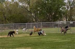 ARE DOG PARKS SAFE?