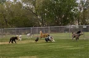 ARE DOG PARKS SAFE?